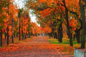 4-autumn-city-park